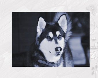 "Post card greeting card ""Alaskan Malamute"" dog - [# GK. 2011.013]"