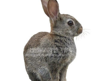 Moments In Time Rabbit Animal Digital Overlay