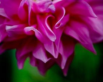 4x6 Delicate Asian Flower