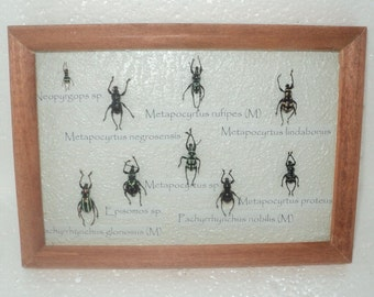 A collection of 9 exotic insects in the frame !