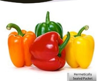 Bell Pepper Mixed Tricolor Red, Orange, Yellow  Pimiento Morron 100 seeds