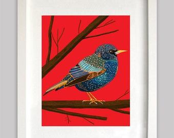 Starling -- Print