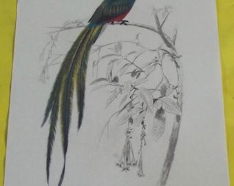 Displays School Zoology Birds couroucou Resplendent 1970.