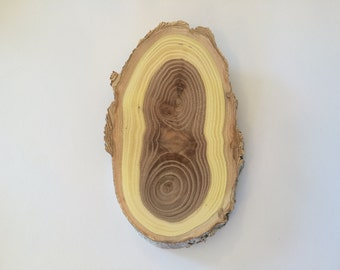3x6 inch  Elm Wood Oval Slice