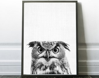Owl Print, Owl Digital Prints, Owl Photography, Bird Photo Print, Printable Owls, Owl Wall Art Print, Owl Poster Print, Owl Digital Prints