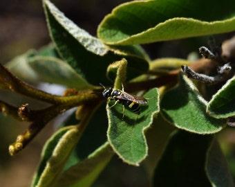 G30 - Wasp on Leaf