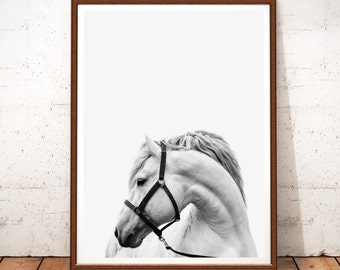 Horse Print, Horse Photography, Horse Printable Art, Horse Photo, Horse Decor, White Horse, Horse Art, White Horse Art, Horse Black White