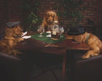 Photographic Print - One too Many! - Dogs drinking and playing cards! - Photography of Dogs