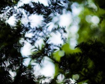 Woodland colour, woodland texture.