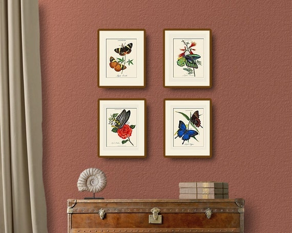 Vintage Butterfly Print Set No. 2, Donovan, Natural History Illustration, Wall Art, Wall Decor, Butterflies, Multiple Sizes