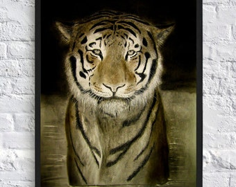 Tiger in water pencil original drawing, A2 print of a sad Tiger, Highly detailed drawing, Bengal Tiger eyes fine art