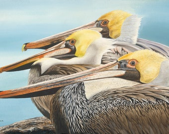 The Gathering - Brown Pelicans