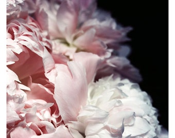 Nature Photograph - Peony Photograph - Flower Photograph - Spring - Efflorescence - Fine Art Photograph - Alicia Bock - Floral Art - Custom
