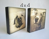 Office Desk Gift, Pet Portrait, Customized Pet Art Gift