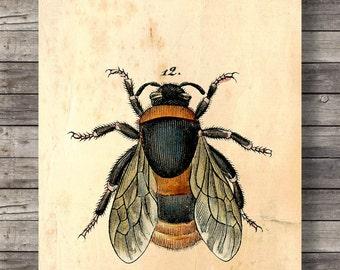 Vintage Bee print   Vintage engraving   vintage style bee print   Printable wall art  INSTANT DOWNLOAD digital