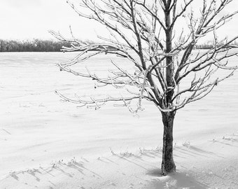 Black and White Tree Photography - Extra Large Landscape Photography - Black and White Scandinavian Art Print - Winter Tree Picture