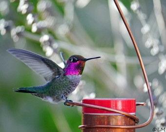 Bee-Proof, Drip-free Copper Hummingbird Feeder I