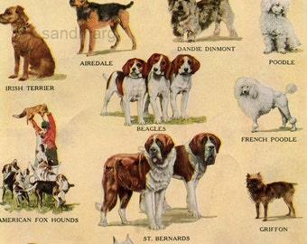 1918 Chart of 16 International Dog Breeds English Bull Terrier St Bernard American Fox Hound