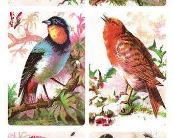 Self Adhesive Victorian Bird 1 Sheet Colorful Scrapbooking Stickers  Number Y192