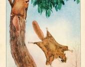 PRINT SALE 20% OFF Vintage 1926 North American Animals  Original Bookplate Illustration, Print, the Flying Squirrel,  Woodland Habitat Scene