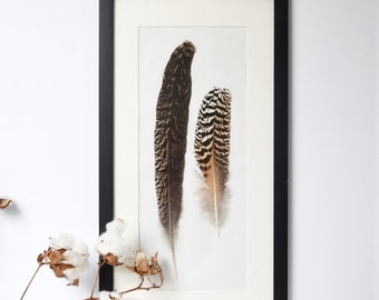 Bird Feathers Framed Cruelty Free Feathers Feather Home Decor Natural Decor wall Decor Rustic Decor Framed Feathers