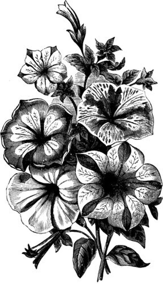 flower boquet printable art  black and white art clipart png clip art digital download image graphics digi stamp vintage art illustrations
