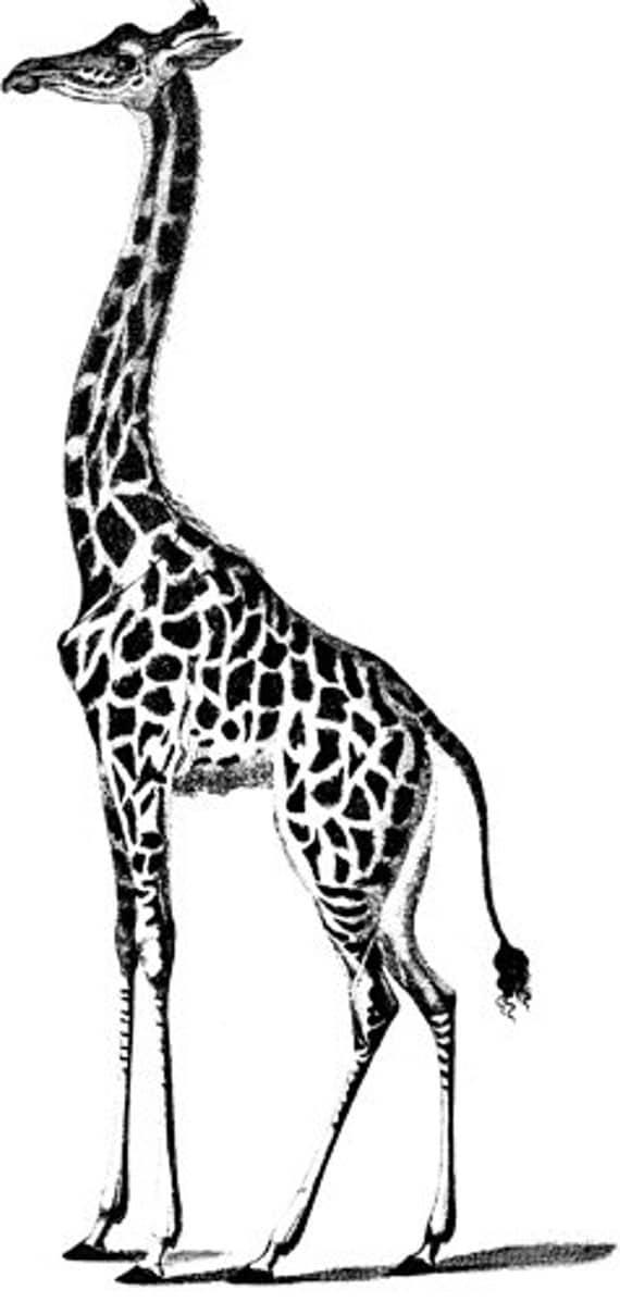giraffe animal clipart png clip art Digital graphics Image art Download jungle images digi stamp digital stamp digital print art printables