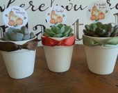 48 Succulent Rosette Plant Favors, White Ceramic Pots for Your Special Event, Thanksgiving, Fall Party