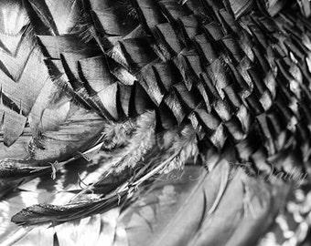 Feather Photo, Nature Photograph, Turkey Wing, Rustic Home Decor, Wall Decor, Black, White, Grey, Farmhouse Decor, Fine Art Photography