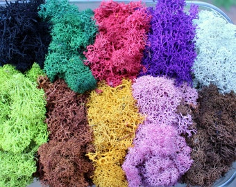 Reindeer moss-Terrarium accessories-1 oz bag in 16 colors-Deer foot Moss-Black-Mango-Red-Gray-Purple-Blue- 1 Oz. Bag Preserved Lichens