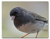 Gray Bird Photograph 8x10 Fine Art Photo of Dark Eyed Junco Closeup View Songbird Art Neutral Wall Decor Gift for Bird Lover Under 30