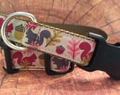 Squirrel Dog Collar - Choice of Webbing Color - In Sizes M - L - XL