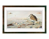 Black-bellied Plover bird PRINT art nature Florida wildlife fine art