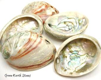 BULK set of SIX  Abalone Shells, Crafts, Sea, Magick, Incense Burner, Wicca, Ritual, Smudge Bowl, Ritual, Ceremony, Sage Burning, Smudging