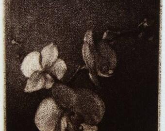 "Original art print ""Orchid"". Mezzotint. Edition of 100"