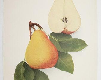 1921 Vintage Decor Fruit Print, Antique Pear Print, Cafe Art, Restaurant Decor, Vintage Fruit Art Gift for Her, Souvenir Du Congres Pear