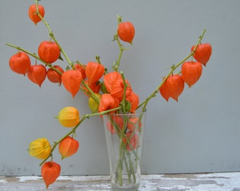 Dried Chinese Lantern seed pods and stems. Halloween . Physalis alkekengi plants, for crafts and arrangements LOT G