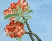 Desert Rose  .  giclee art print