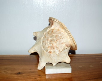 Wonderful vintage large Polished Natural Conch Shell, mounted on a white Marble Base ~ Seaside, Beach, Regency, Naturalist, Library Decor