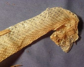 """Cruelty Free - No. O5 - 33"""" Inch Xanthic Western Diamondback Rattlesnake Rattler Skin Shed - Reptile Herp Cruelty Free Religious Magic Spell"""
