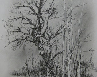 Graphite and Ball Point Pen Drawing Original Art A4 Signed Trees