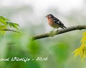 Calendar 2016 - Local Wildlife - English