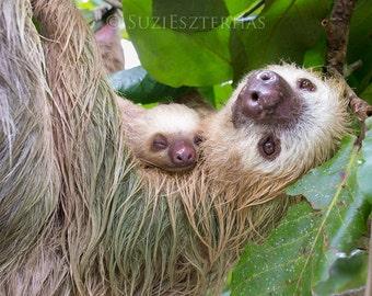 SLOTH and SLEEPY BABY Photo, Nursery Art Print, Baby Animal Photograph, Safari Baby Nursery,  Nursery Decor, Wildlife Photography, Zoo