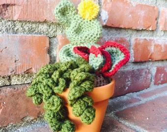 Crochet succulent cactus