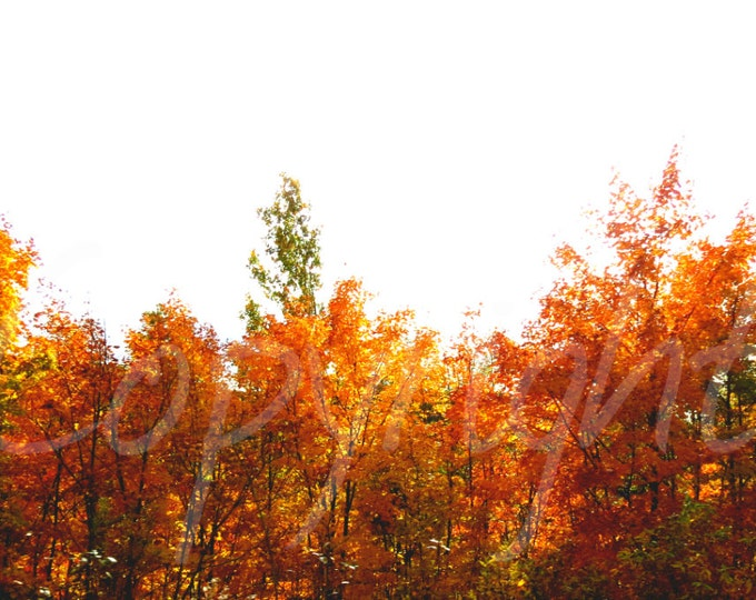 Fall Leaves, Print Photography or Greeting Card, Fine Art Photography, Gift Idea, Wall Art, Nature, Woodland