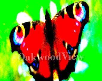 Peacock Butterfly Print, Multicolored Surreal Giclee Art, New 4x6 Color Print in 5x7 Mat, Nature Wildlife, FREE SHIPPING