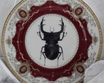 Vintage Beetle Plate, Bug Plate, Bug Dish, Insect Dish, Red Gold Plate, Bug China, Insect China, Entomology Plate, Halloween Dishes