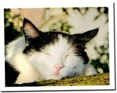 Cats Sweet Dreams Card, tuxedo cat, cat greeting card, note card