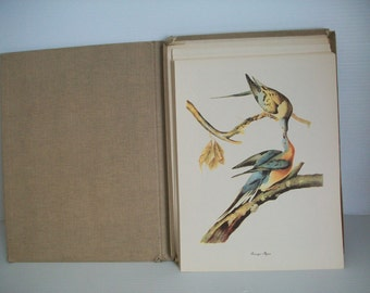 50 Audubon Birds of America Portfolio of Prints | Roger Tory Peterson prints of audubon birds | antique images of birds collectible bird art