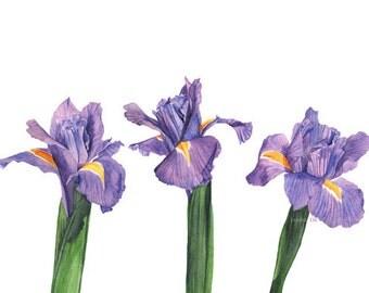 Iris watercolour painting print -I3416- 5 by 7 size smallest print, Iris print, Irises watercolor painting, botanical art, purple wall art